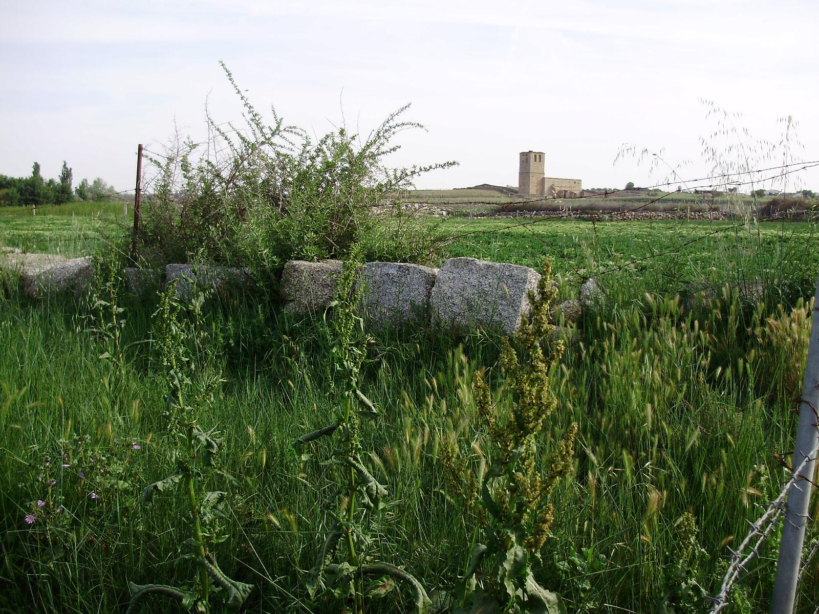 jumela